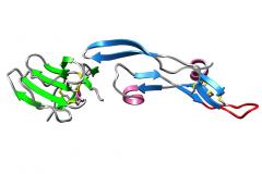 miniTGF-β2-7m:TβRII