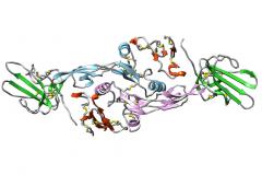 TGF-β1:TβRII:TβRI